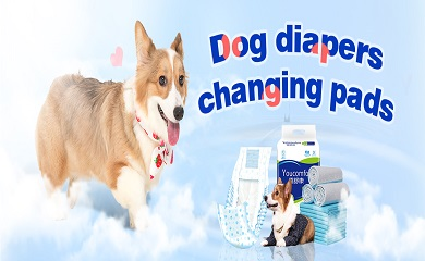 4 Reasons To Say Yes To Dog Diapers